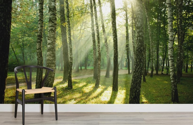 sunrise-forest-room-820x532